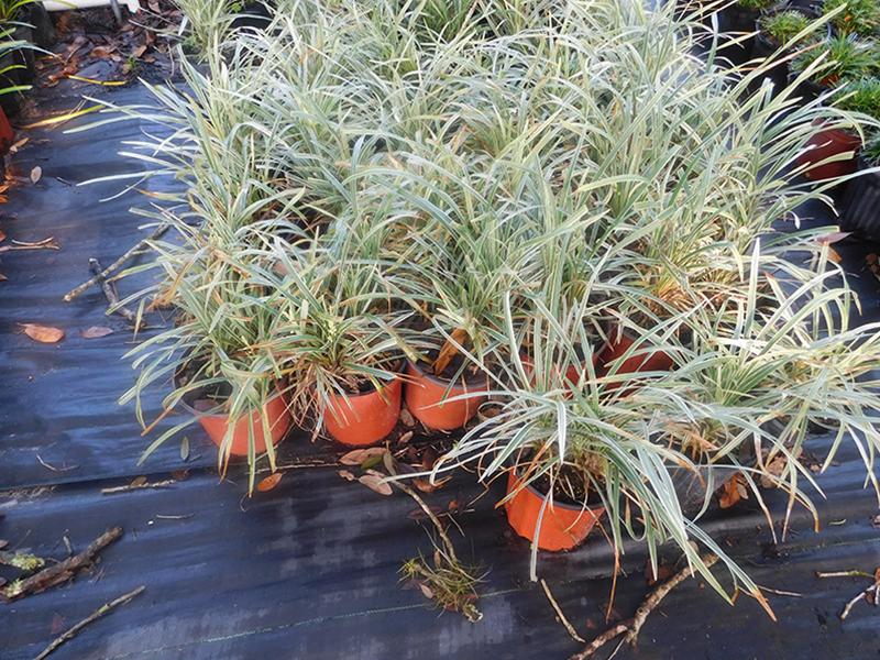 Plants Sieffert S Nursery